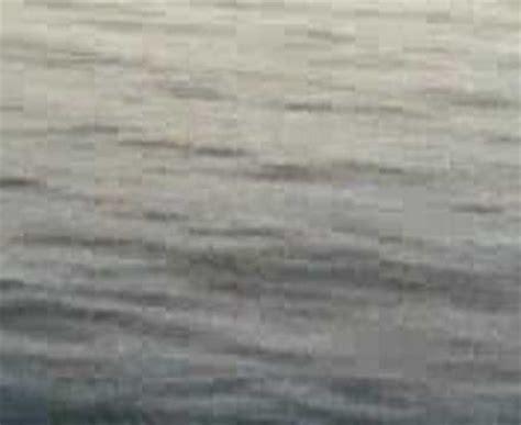 pesca spigola porto spigola 2 7kg con bolognese al porto di pozzuoli