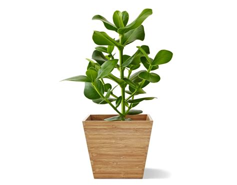 Plants In Planters by Garden Decoration Garden D 233 Cor Ikea