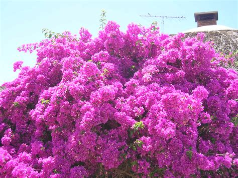 small flowering shrubs for landscaping how to landscape with bushes garden guides