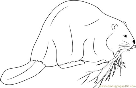 beaver color beaver coloring page free beaver coloring pages