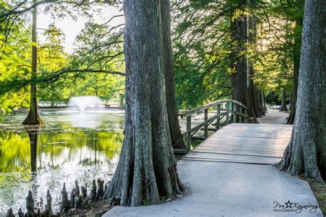 swan lake iris gardens sumter south carolina beautiful