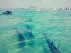 glass bottom boat tours pensacola fl 1000 images about adventures for the kids on pinterest