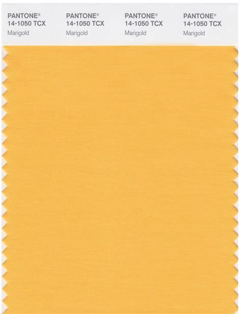 marigold color pantone smart 14 1050 tcx color swatch card marigold