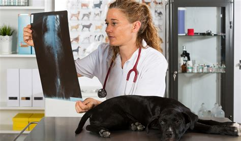bone cancer in dogs bone cancer in dogs what it means for your and what you can do