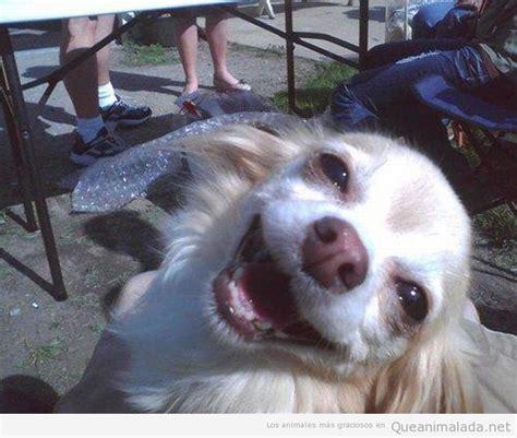 fotos animales riendose risa archivos