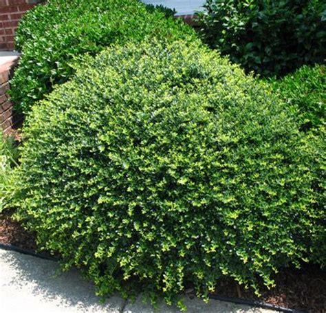 Landscaping Ideas Evergreen Shrubs Best Evergreen Garden Ideas On