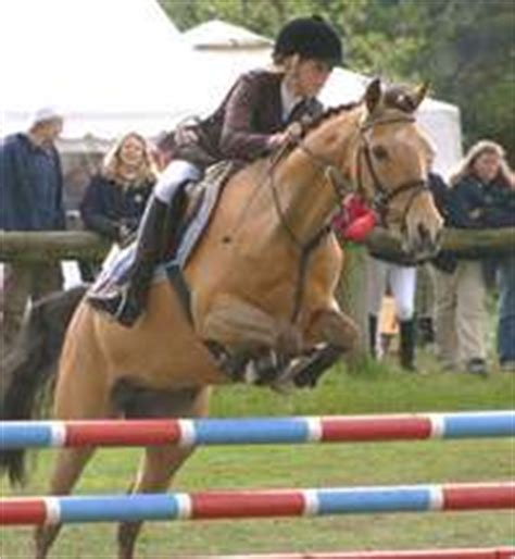 sport soundness and performance advice for dressage showjumping and event horses from chion riders equine scientists and vets books show jumping information horsemart