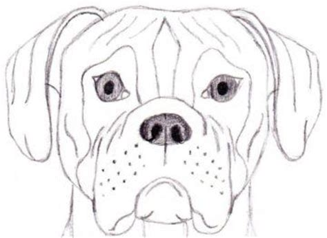 Drawn Dog Face - Pencil and in color drawn dog face Easy Dog Face Drawing