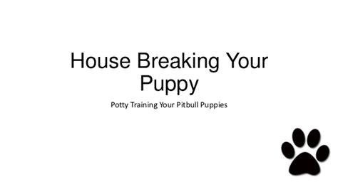 potty a pitbull puppy pitbull puppies potty