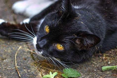 gatto in appartamento gatti in appartamento tutto ze