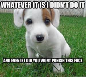 cute puppies memes yahoo search results   cute