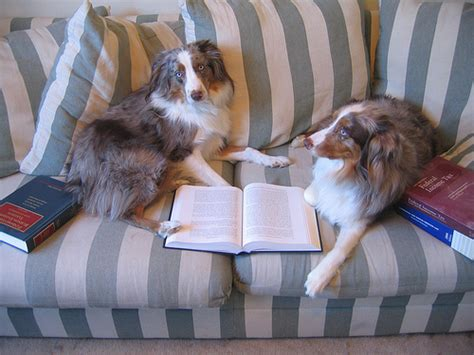 puppy studying 21 dogs who are painfully ready for barkpost