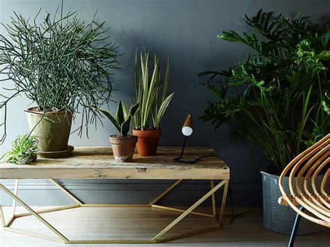 cuidado plantas interior c 243 mo cuidar plantas de interior hogar qps