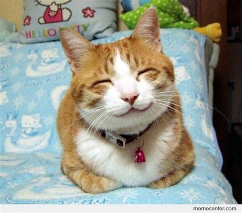 Smiling Cat Meme - smiling memes image memes at relatably com