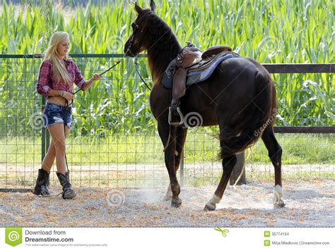 horses testo taming a stock images image 35774194