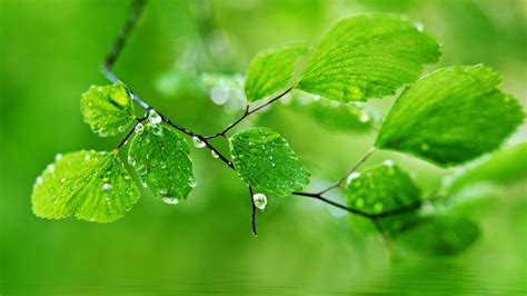 green hd wallpaper best fresh background image use lives green nature wallpapers hd pictures one hd wallpaper