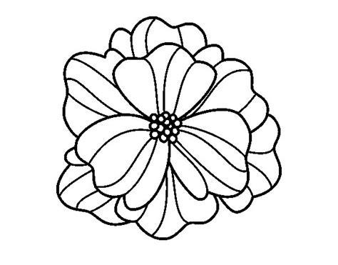 viola fiore disegno disegno di viola pensiero da colorare acolore