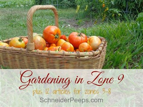vegetables zone 9 gardening in zone 9 plus tips for other zones