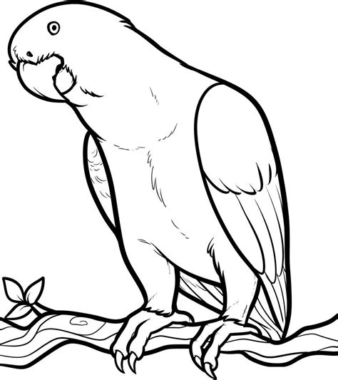 parrot template free printable parrot coloring pages for