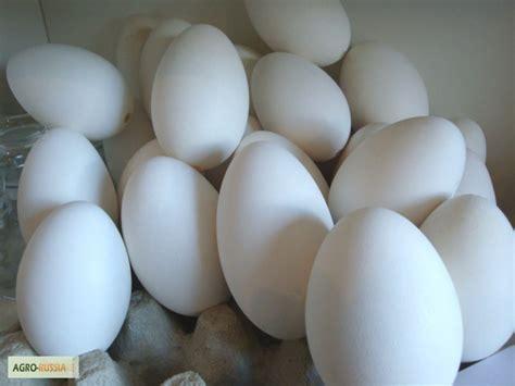 Картинки утиное яйцо
