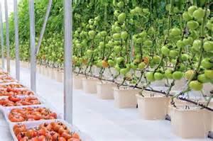 Indoor Hydroponic Gardening Kit - hydroponics tomatoes gardens gardening ideas