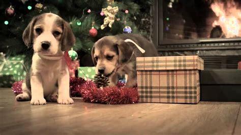 beagle merry christmas youtube