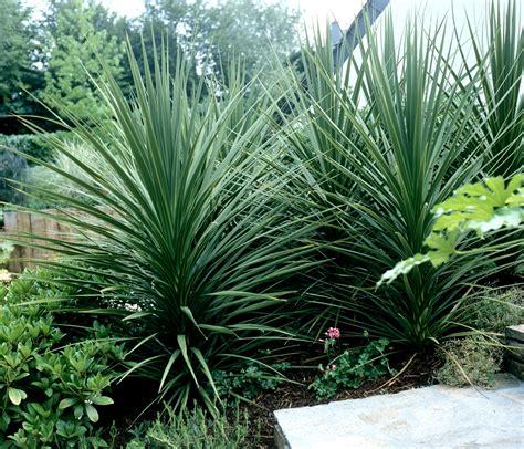 Beau Plante D Interieur Plein Soleil #3: mainImage-source-11401378.jpg