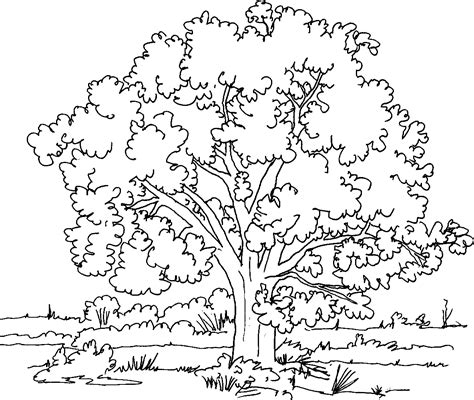 coloring pages of neem tree 193 rbol 46 naturaleza p 225 ginas para colorear
