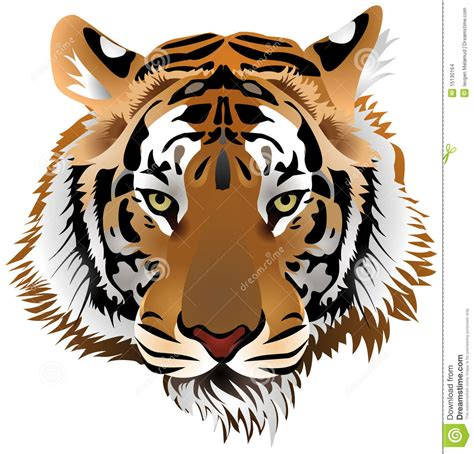 tiger head stock vector image of head east hunting