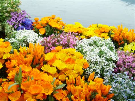 Spring Pictures Asisbiz Flowers Local Wild Spring Flower Garden In India