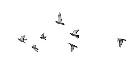 tattoo bird png i love banner