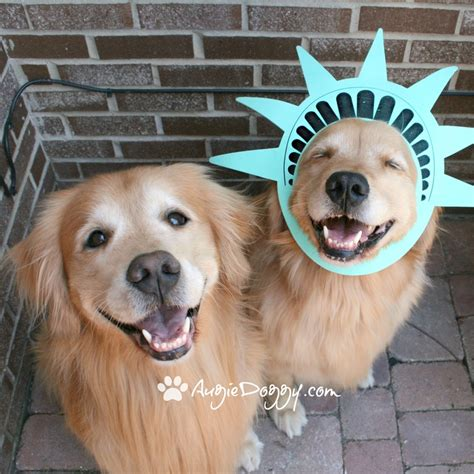 golden retriever costume for humans 10 best images about golden retrievers in costume on apps and hippies