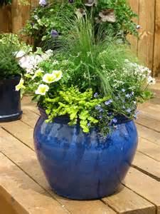 yardzooks container gardening planting tips
