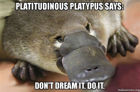 Platypus Meme - platitudinous platypus says don t dream it do it