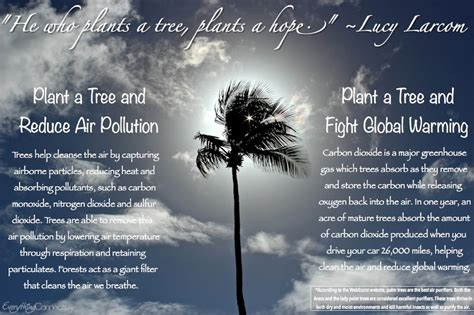 How To Detox From Plouted Air by Reduce Air Pollution Everything Connects