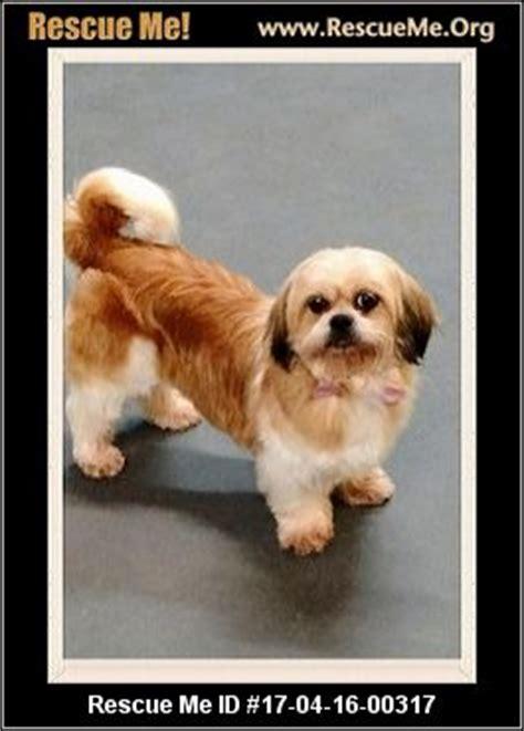 delaware puppy rescue delaware rescue adoptions rescueme org