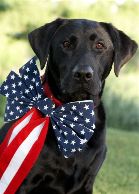 patriotic puppy 1326 best images about pet photography prop ideas puppy on