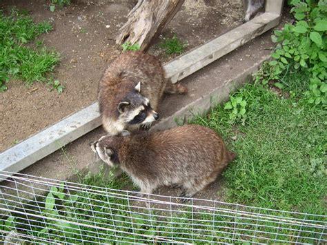 zoologischer garten routenplaner ausflugsziel zoologischer garten hof hof frankenradar