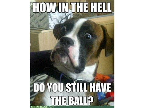 Dog Owner Meme - funniest ever memes for dog owners