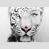 Half Lion Half Tiger Art | 482 x 343 jpeg 32kB
