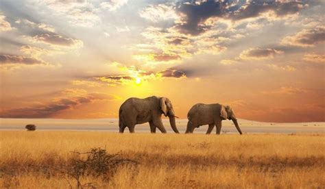 beautiful pictures of 15 beautiful elephant pictures