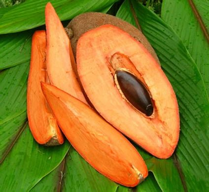 Mkl209 Small Zapote Filomenia 1 1000 images about mamey on orange color norte and fruit