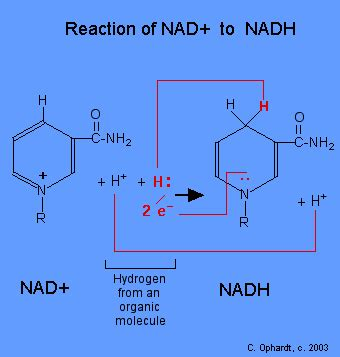 Niacin To Detox Nicotine by 17 5 Niacin The Vitamin Needed For Many Redox Reactions
