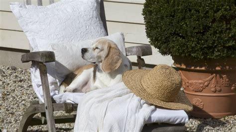 cucce e cuscini per cani westwing cuscini per cani grandi comfort per la cuccia
