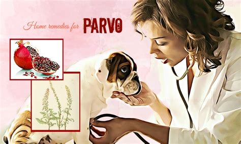 home remedies for parvo in puppies 36 effective home remedies for lactose intolerance attack