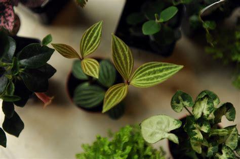 north window plants studiology