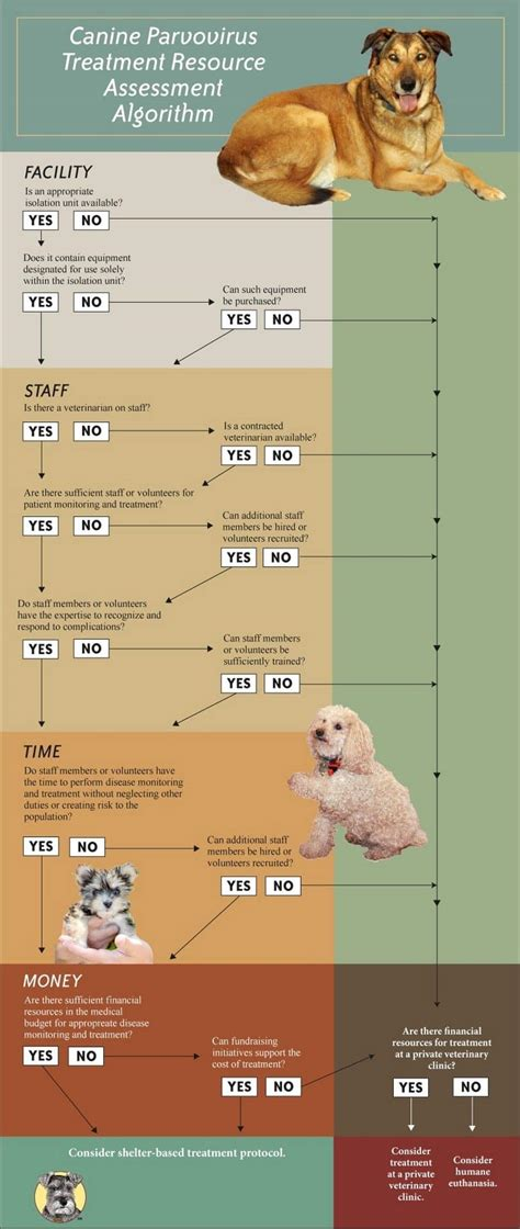 parvo in dogs a viral disease that can be treated