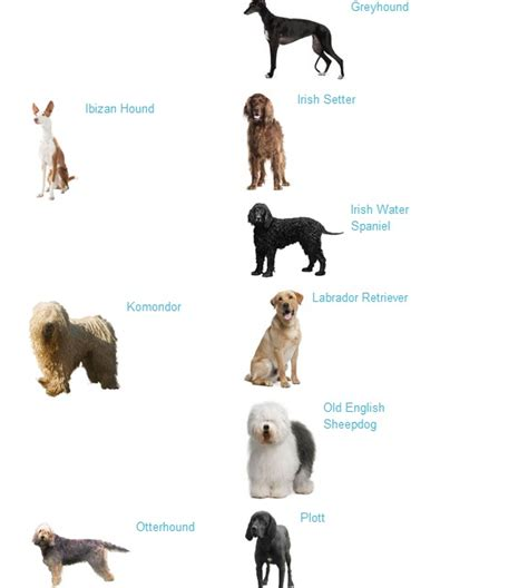 large breeds pictures and names breeds list