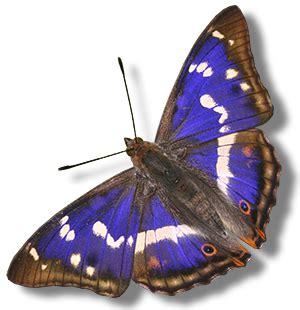 Lu 7 Warna Berbentuk Kupu Kupu gambar kupu kupu yang cantik dan indah kumpulan gambar