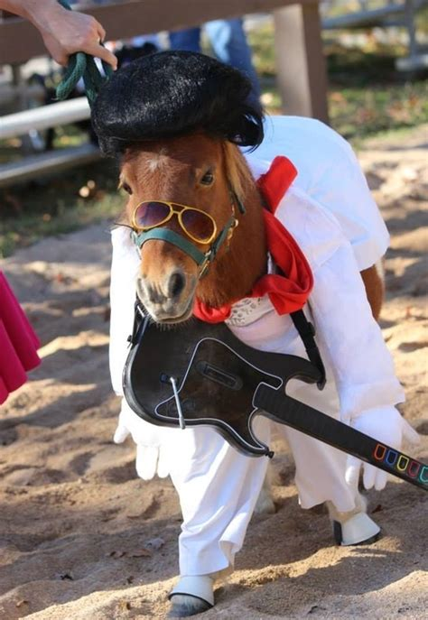 horse halloween costumes   brilliantly funnyyou